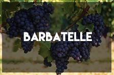 Barbatelle | Vivaio Oasi del Verde | Pisa