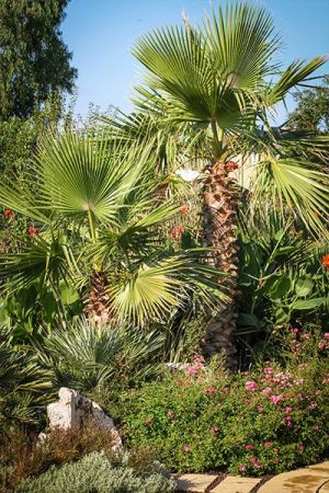 Giardini | Vivaio a Pisa | Oasi del Verde