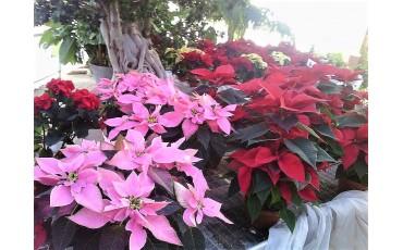 Natale al Vivaio: tutte le nostre aperture straordinarie.
