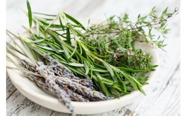 7 aromatiche che non possono mancare in cucina